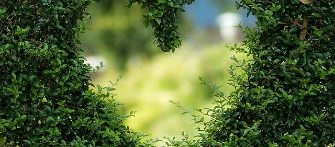 Srdce v živém plotu